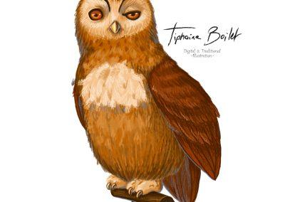 Chouette illustration digital | Tiphaine Boilet illustrateur freelance Nantes