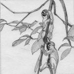 croquis singe illustration | Tiphaine Boilet illustratrice jeunesse Nantes
